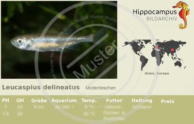 Etiketten von leucaspius delineatus for Welse teichfische